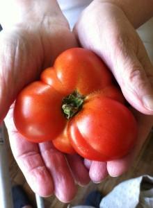 odd tomato
