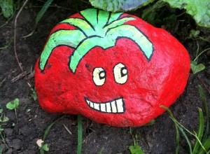 tomato rock